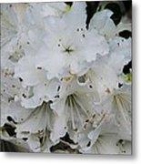 White Azaleas In Bermuda Metal Print