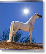 White Beauty Under The Moonlight Metal Print