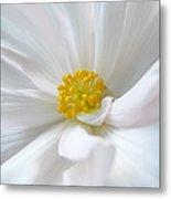 White Begonia Flower Macro Metal Print