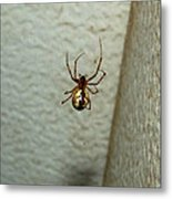 White Belly Spider Metal Print