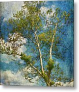 White Birch In May Metal Print