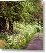 White Bloom Along The Dutch Canal. Netherlands Metal Print