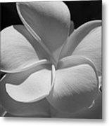 White Bloom B W Metal Print