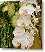 White Blooming Trail Metal Print