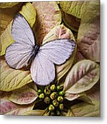 White Butterfly On Poinsettia Metal Print