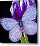 White Butterfly On Purple Tulip Metal Print