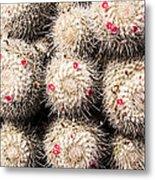 White Cactus Pink Flowers No1 Metal Print