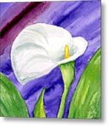 White Calla Lily Purple Mood Metal Print