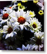 White Chrysanthemum Metal Print