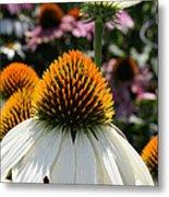 White Cone Flower Metal Print