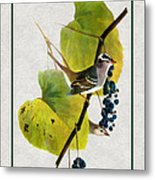White Crowned Finch Vertical Metal Print