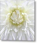White Dahlia Floral Delight Metal Print