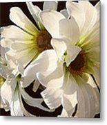 White Daisies In Sunshine Metal Print