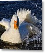 White Duck 1 Metal Print
