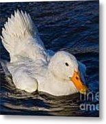 White Duck 2 Metal Print
