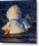 White Duck 3 Metal Print