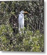 White Egret In The Swamp Metal Print
