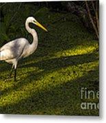 White Egret Metal Print