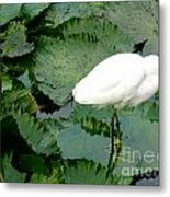 White Egret On Lilypads Metal Print
