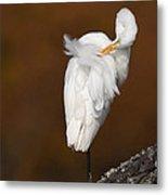 White Egret Preening Metal Print