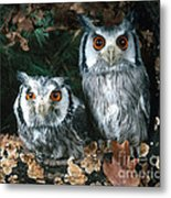White Faced Scops Owl Metal Print