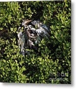White Feather And Green Metal Print