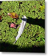 White Feather Lost Metal Print