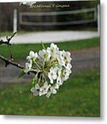 White Florescence Metal Print