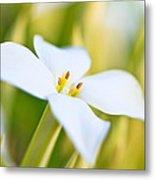 White Flower 2 Metal Print