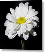 White Flower Metal Print by Gennadiy Golovskoy
