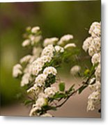 White Flower In The Tree Metal Print