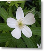 White Flower Metal Print