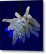 White Flower On Dark Blue Background Metal Print