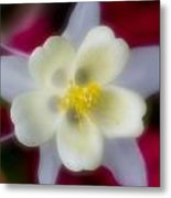 White Flower On Red Background Metal Print