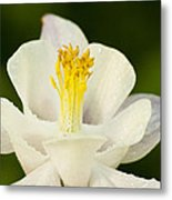 White Flower Metal Print by Oscar Karlsson