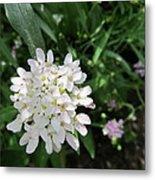 White Flowerettes Metal Print