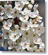 White Flowering Tree Flowers Metal Print