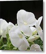 White Flowers 3 Metal Print