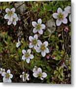 White Flowers And Moss Metal Print