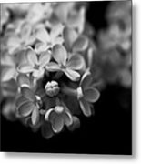 White Flowers In Black And White Metal Print