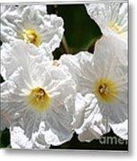 White Flowers In The Desert Metal Print