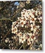 White Flowers Tree Metal Print by Ioana Ciurariu