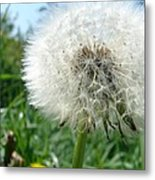 White Fluffy Metal Print