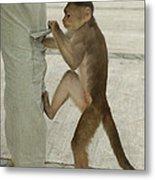 White-fronted Capuchin Checking Pocket Metal Print