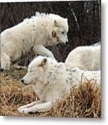 White Furs Metal Print