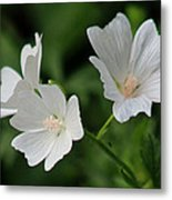 White Garden Flowers Metal Print
