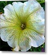 White Garden Petunia Metal Print