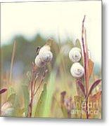 White Garden Snail Metal Print