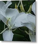 White Ginger Lily Metal Print