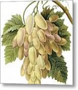 White Grapes Metal Print